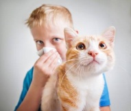 Allergic to Cats