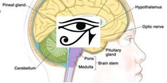 Eye of Horus 2